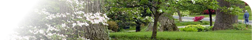 stoneleigh trees