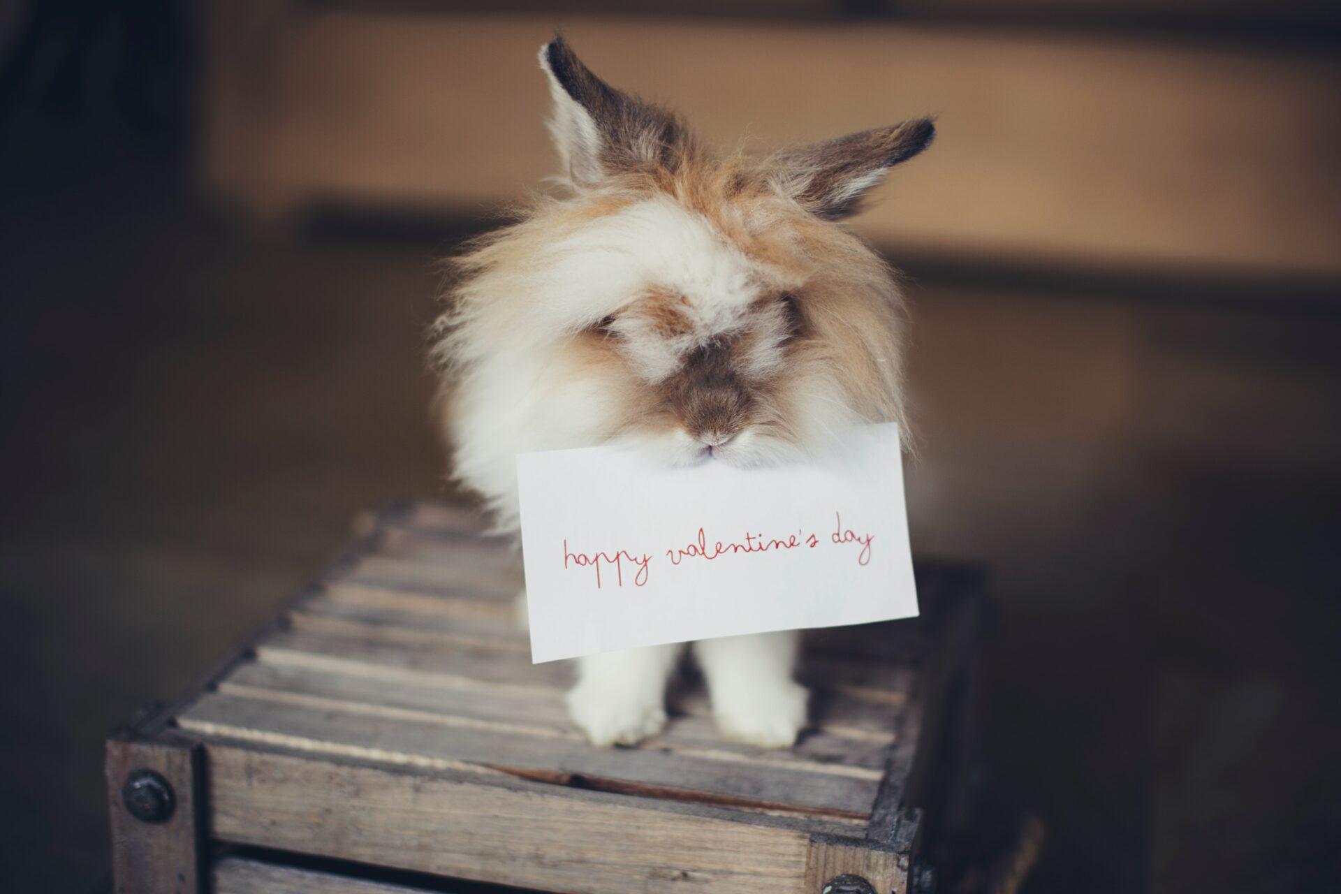 Stoneleigh Valentines